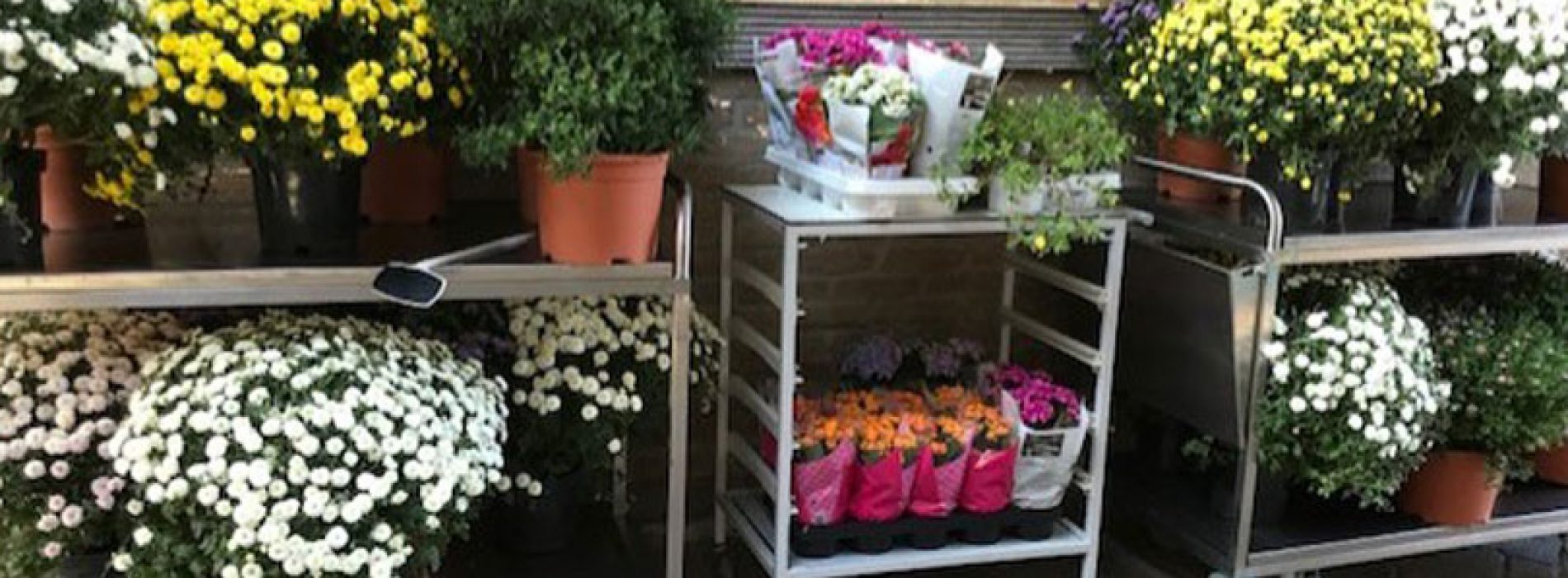 Plantenpracht van Florero Best
